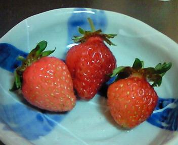 収穫した苺姫